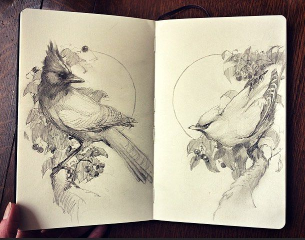 Posted by vanessafoley up next two birds with fab hairdos rough moleskine sketch