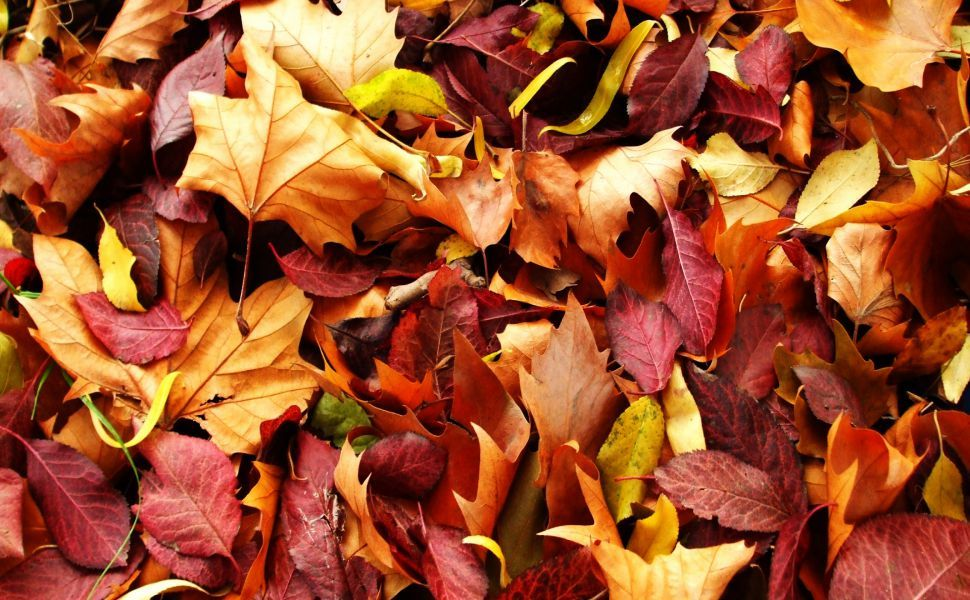 Superbe Autumn Leaves HD Wallpaper