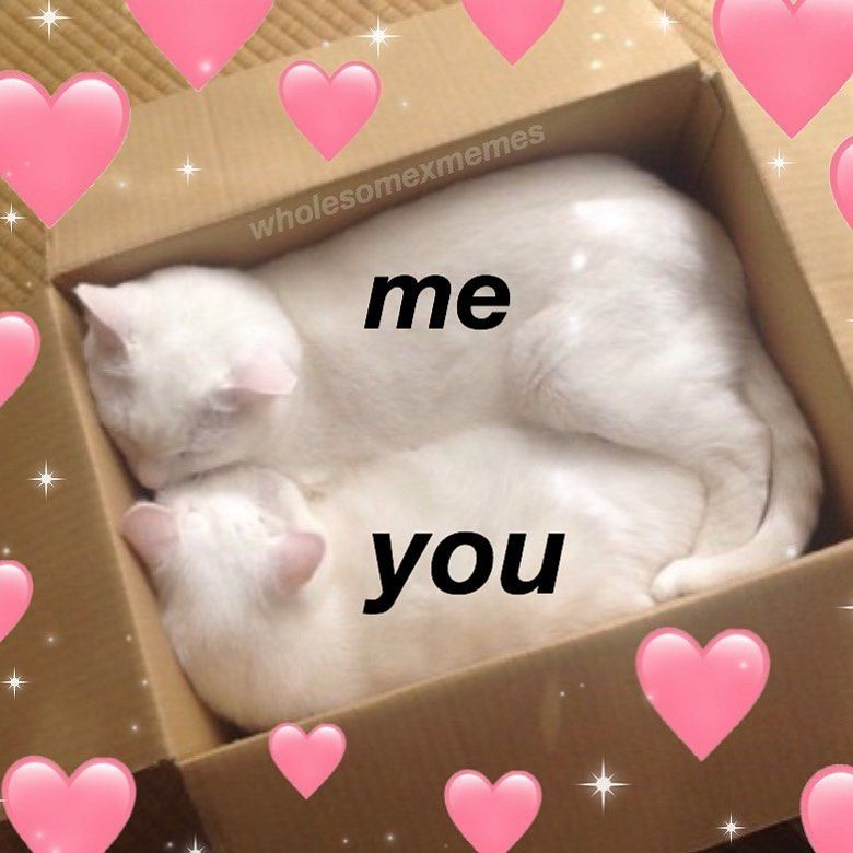 Tag Someone You Wanna Cuddle Follow Me Uwu Memes For More Cute Cat Memes Cuddling Meme Cute Memes