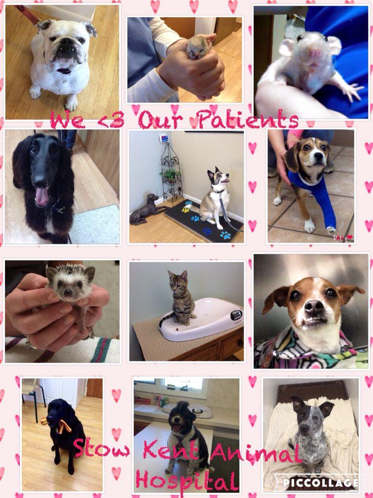 Big Or Small We Love Them All Vet Pet Clinic Veterinary Hospital Animal Hospital