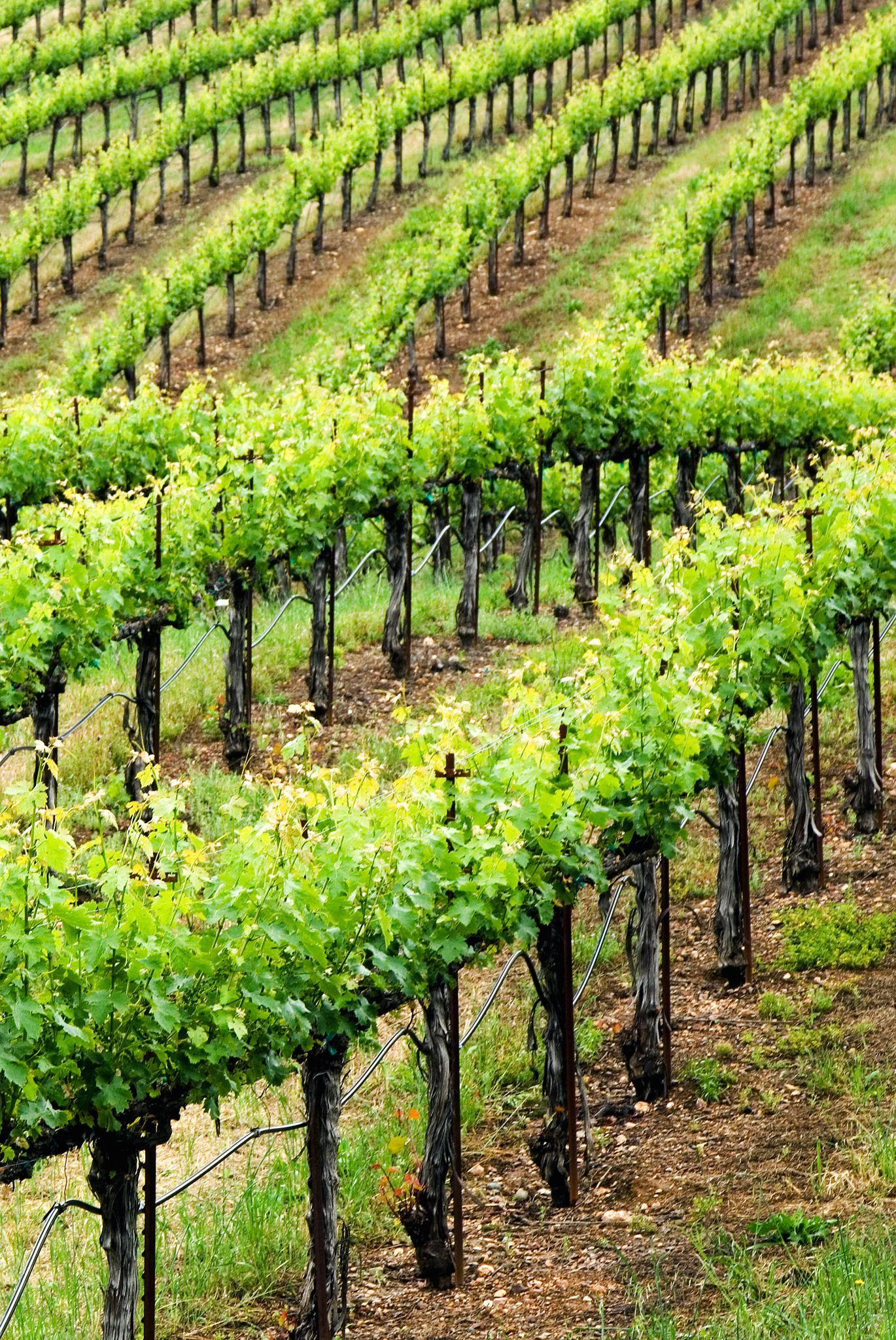 North Block Hotel Yountville Ca Wine Vineyards