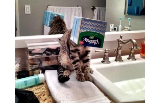27 Hilarious Photos Of Cats Who Truly Regretted Their Decisions (Slide #4) - Pawsome