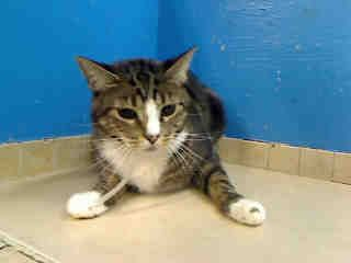 URGENT must be rescued tonight from NYC shelter. Do you have room for a new friend in your life?