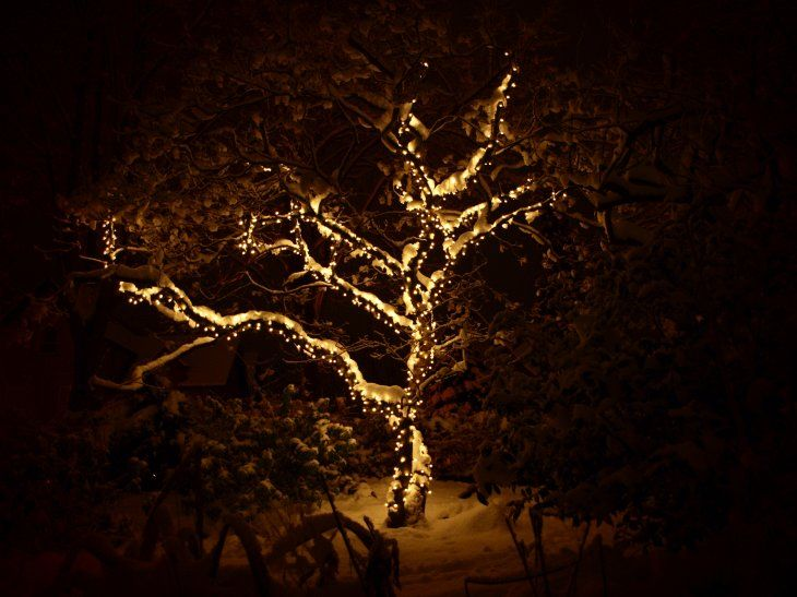 Rope lights trees google search lights pinterest lighted rope lights trees google search mozeypictures Choice Image
