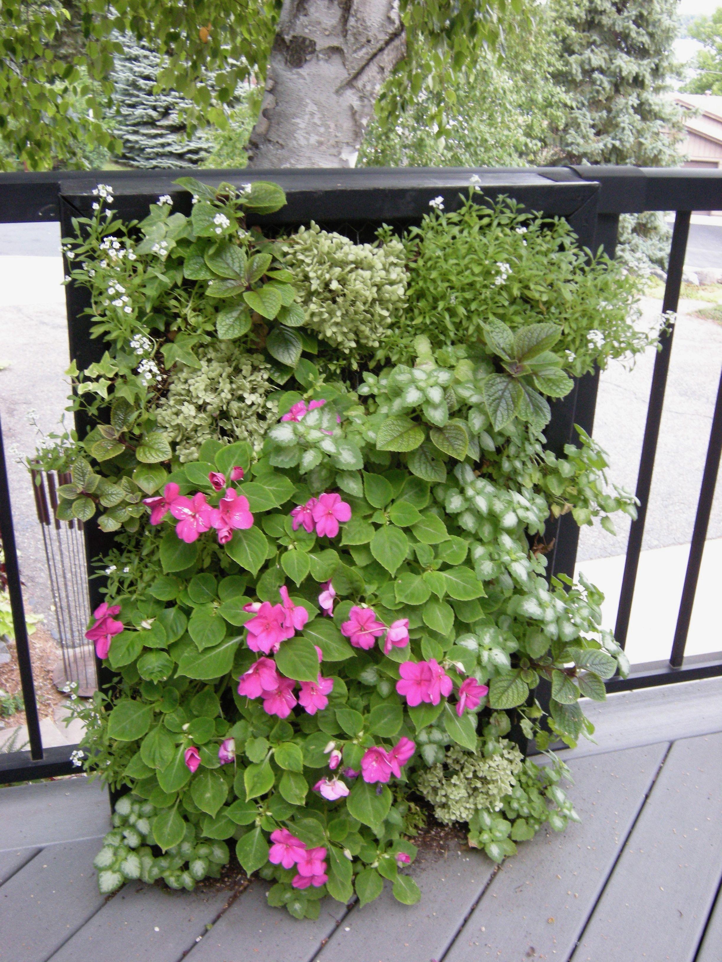 Vertical Garden Sweet Alyssum Lamium White Nancy Pink Impatiens