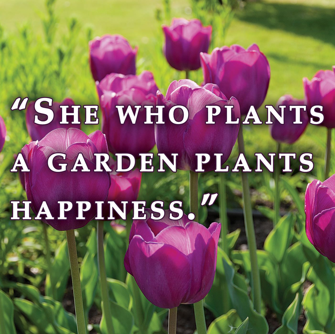 Quot She Who Plants A Garden Plants Happiness Quot Garden Quotes