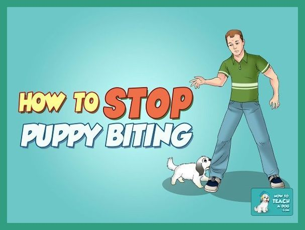 Ready to stop young puppy biting fast?! These 10 tips will