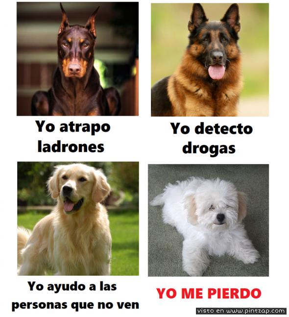 Tipos De Perros Memes De Perros Chistosos Humor Divertido Sobre Animales Humor De Perros