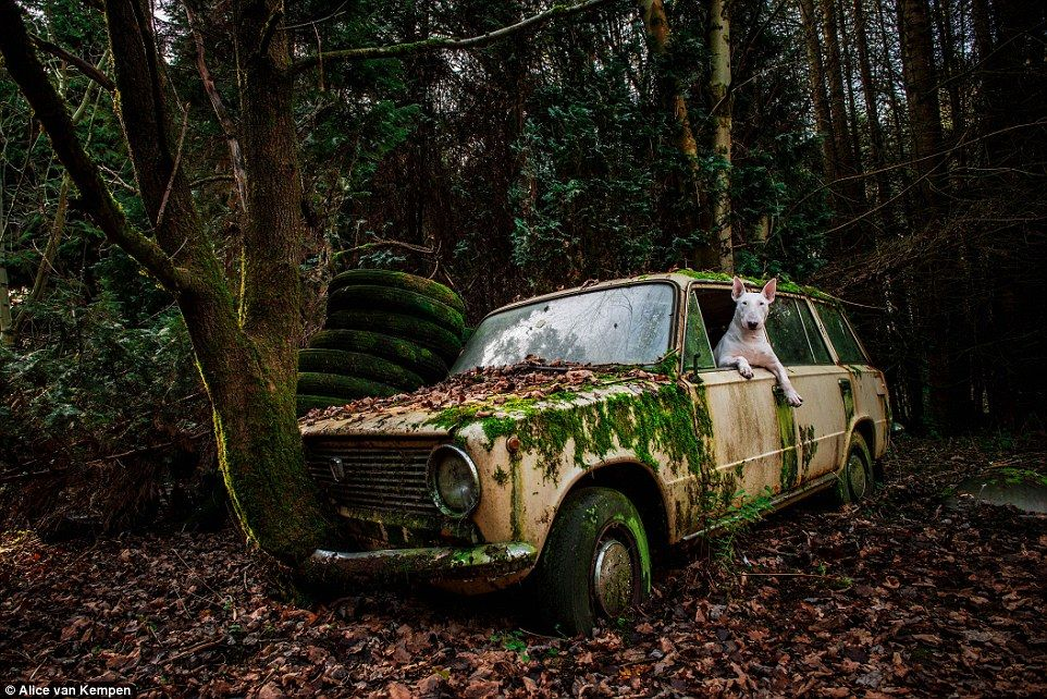 Meet Claire: The Jetsetting Dog Visiting The Worldu0027s Most Beautiful  Abandoned Places