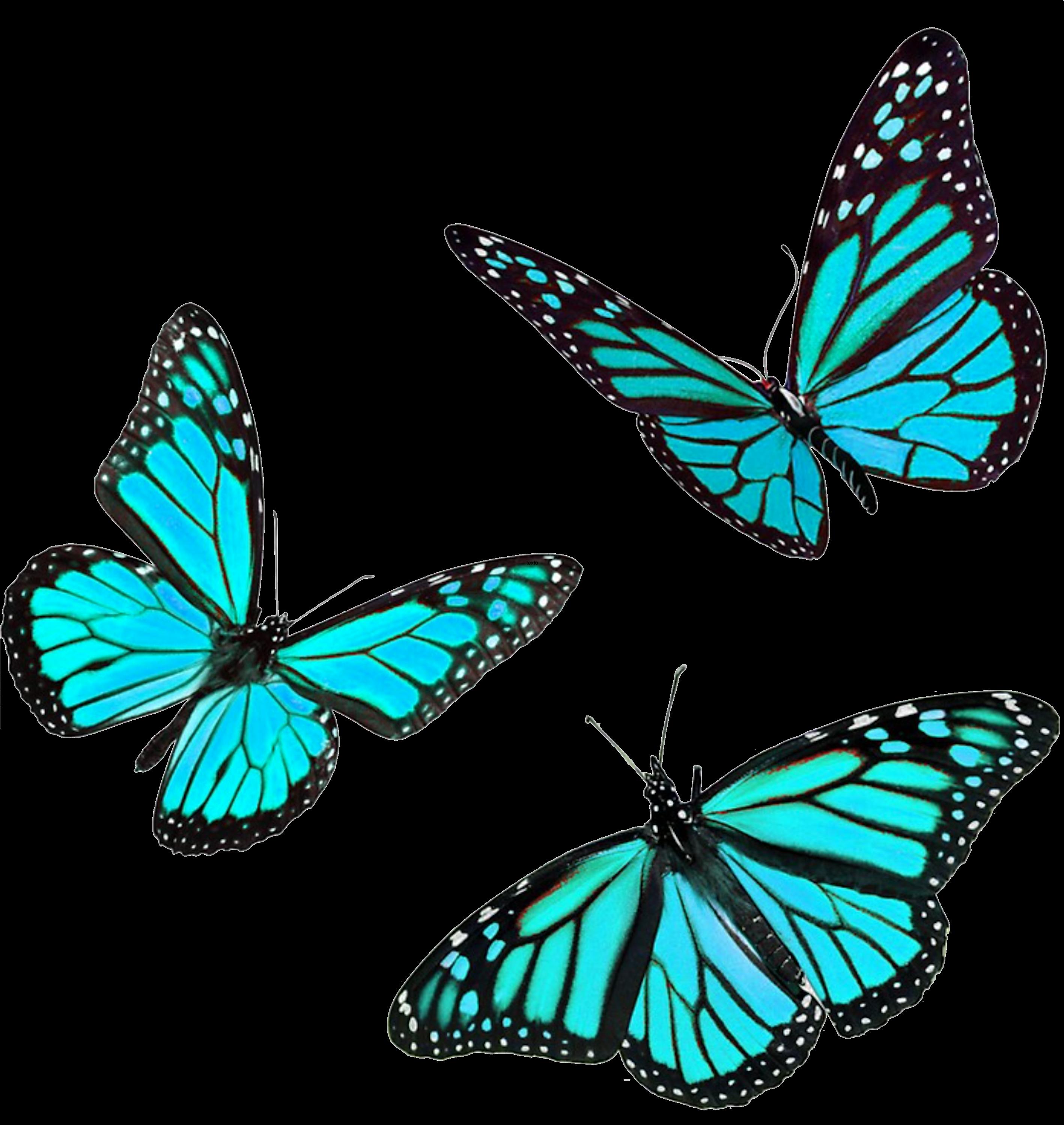 Pegatina Blue Butterflies De Carlasaizz Butterfly Art Butterfly Drawing Blue Butterfly