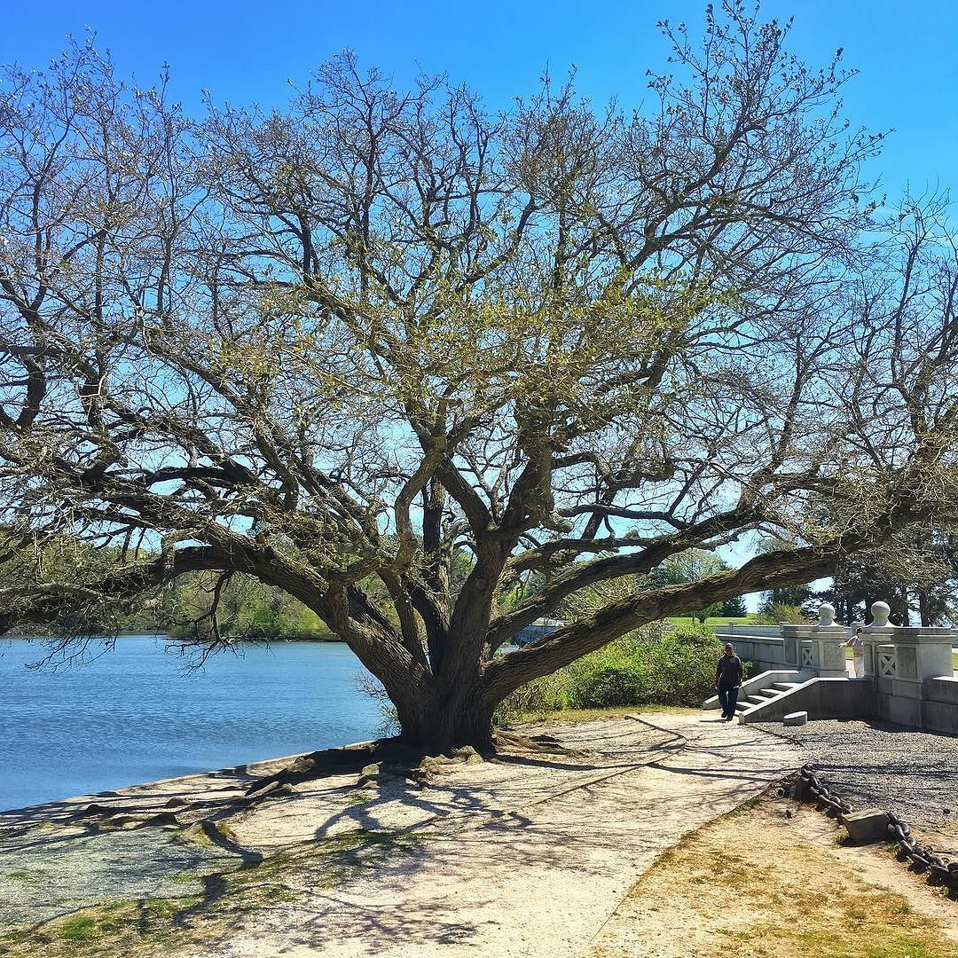 The southern living oak is finally getting some color by ...