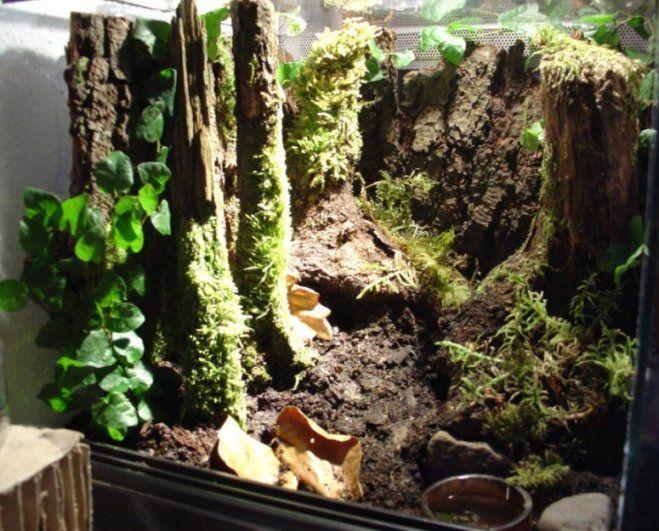 bilder von terrarien seite 10 terrarium pinterest bilder gew chshaus h tte und aquarium. Black Bedroom Furniture Sets. Home Design Ideas