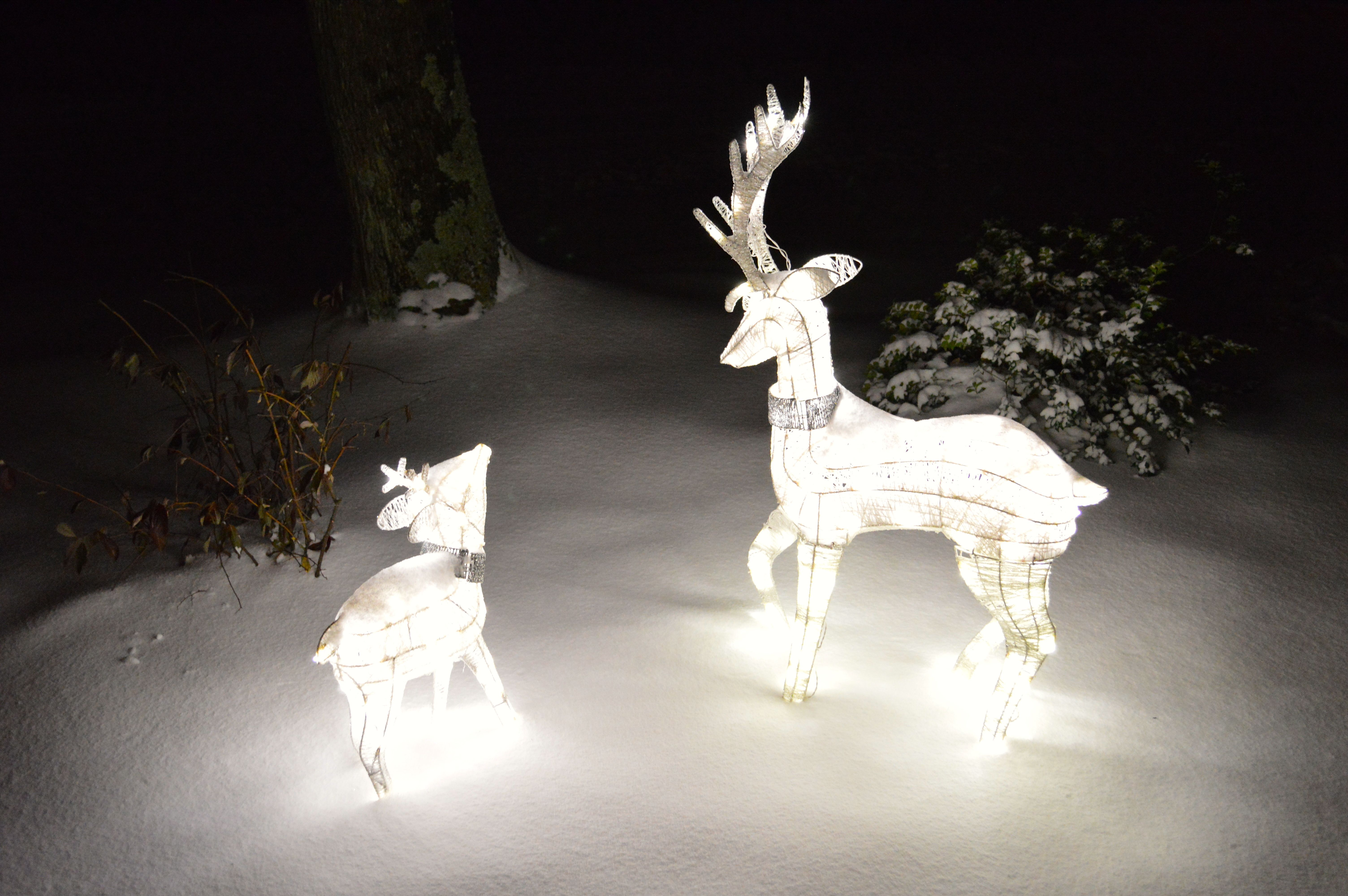 White Led Lighted Buck And Fawn Target Outdoor Christmas