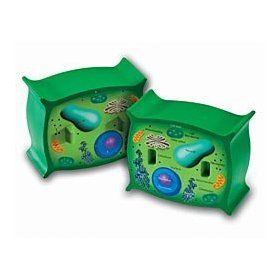 Cell model. One side labeled one side not. | Plant cell ...