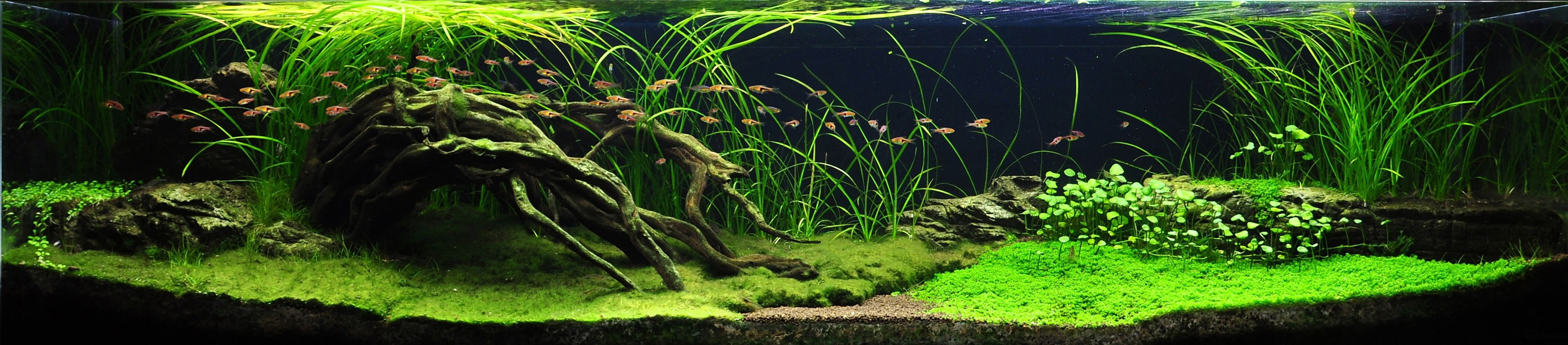 Extra long aquascape looks so peaceful to watch to expand