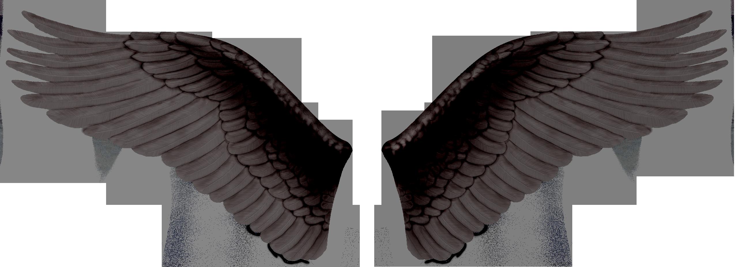 Black Wings Png Image Black Wings Wings Png Wings
