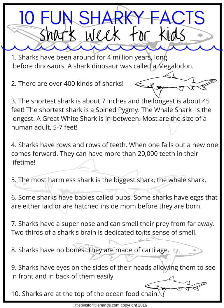 Ocean Zones Worksheet Middle School Shark Week Activities And Stem Projects For Kids On Science Worksheets Shark Facts For Kids Shark Activities Shark Facts [ 1056 x 768 Pixel ]