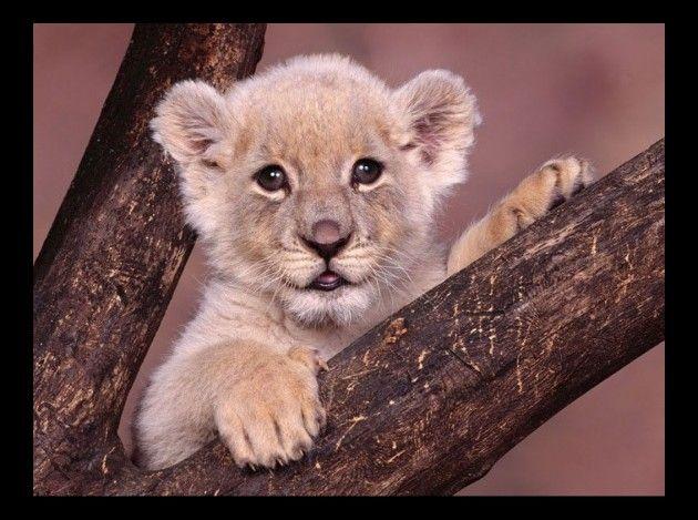 bb leeuw
