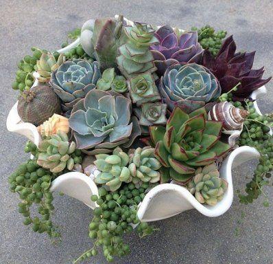 C mo decorar con nuestra colecci n de suculentas plants for Succulent dish garden designs