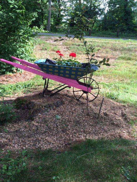 repurposed wheelbarrow- front yard