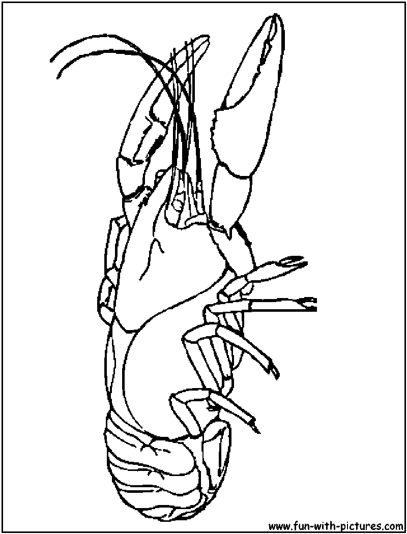 Crayfish Coloring Page Painting Christmas Crab Shells Coloring