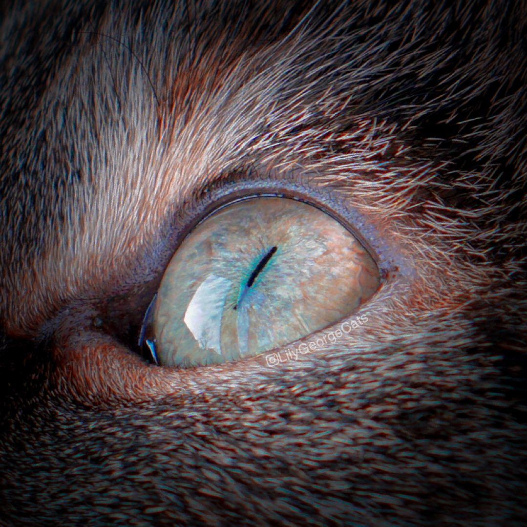 7 easy steps to give your cat a massage in 2020 Cats eye