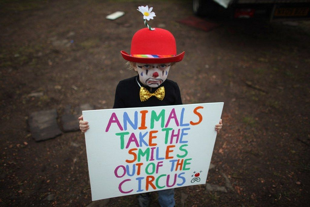 30 Things You Never Knew About Circuses Animals Wild