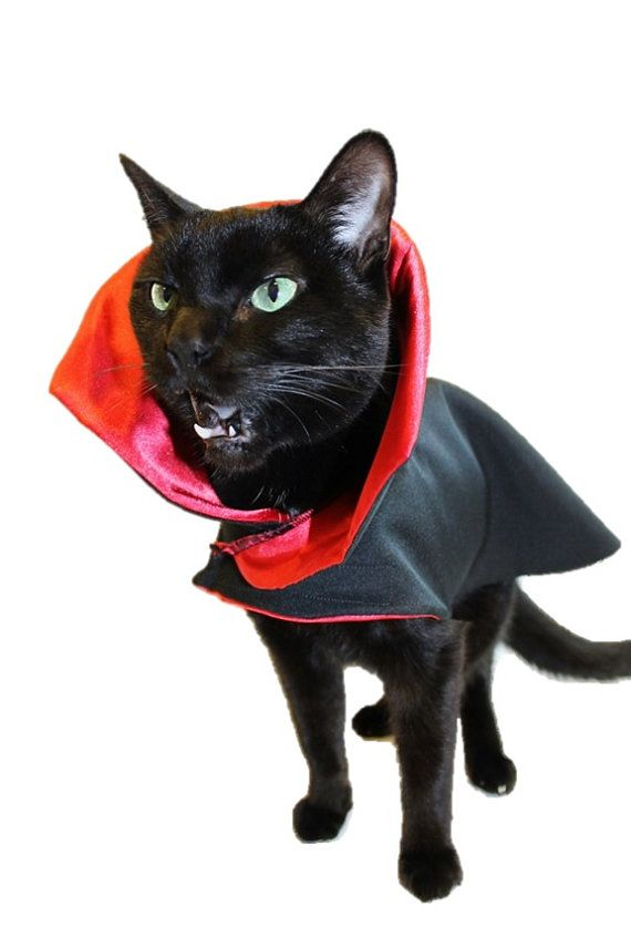 cat halloween costume dracula vampire cat costume by rockindogscoolcats - Halloween Costumes For Kittens Pets