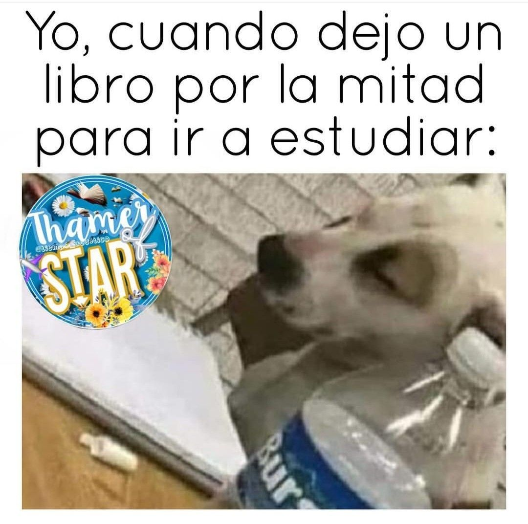Pin By Luciana On Memes Memes Dogs Animals