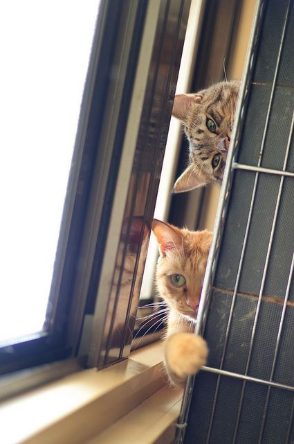 Pin by R2 on ️ Cats PeekABoo and HidenSeek Cats