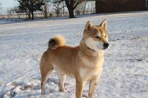 oklahoma city pets - craigslist | pets | Pets, City