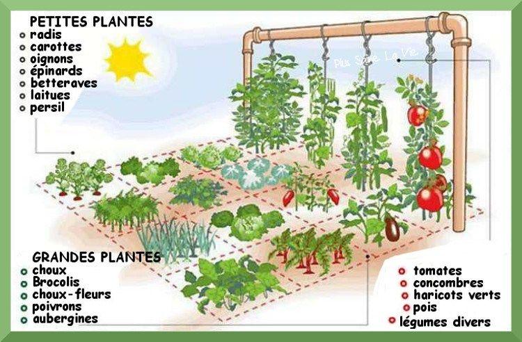 Comment cr er un jardin potager sur 1 m tre carr jardin - Comment faire un jardin vertical ...