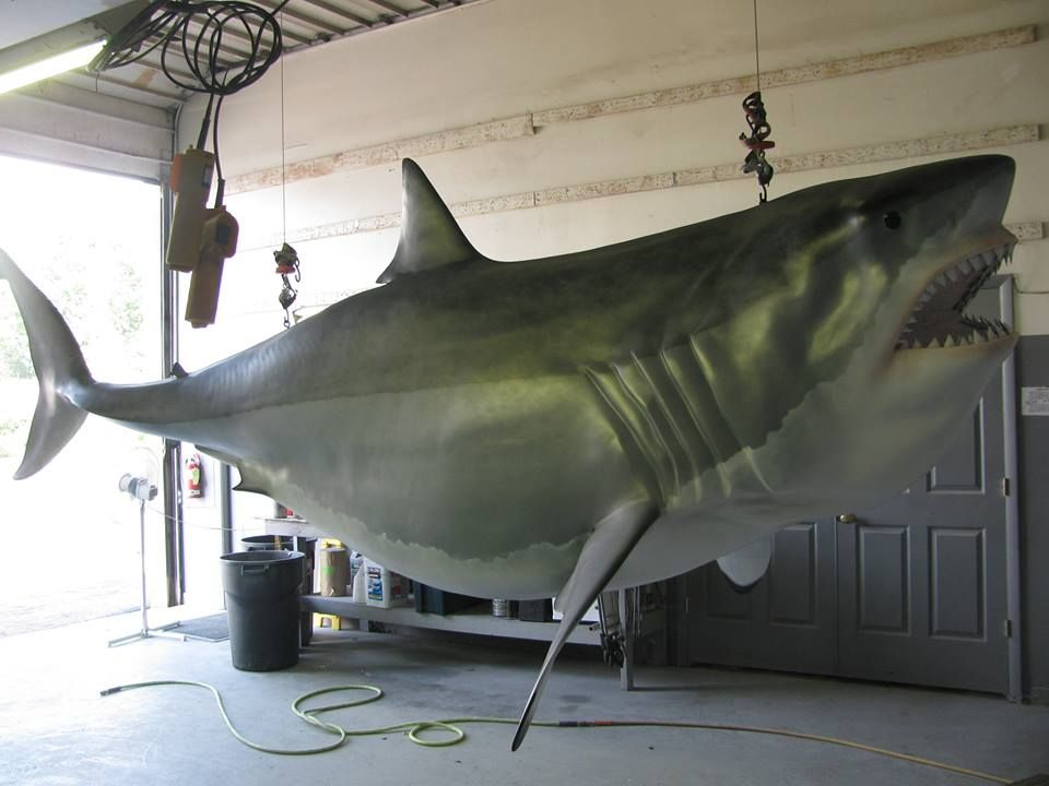 3,000 lb  Great White Shark just finished up by the team at