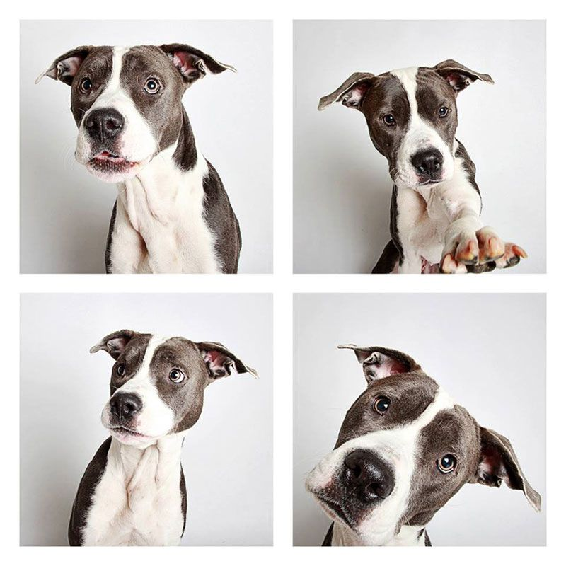 This Photographer Does Photo Booths For Dogs To Increase Adoption And It S Working Dog Adoption Dog Photos Dogs