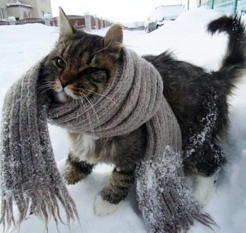 you know, I do wear a fur coat. #cat #snow