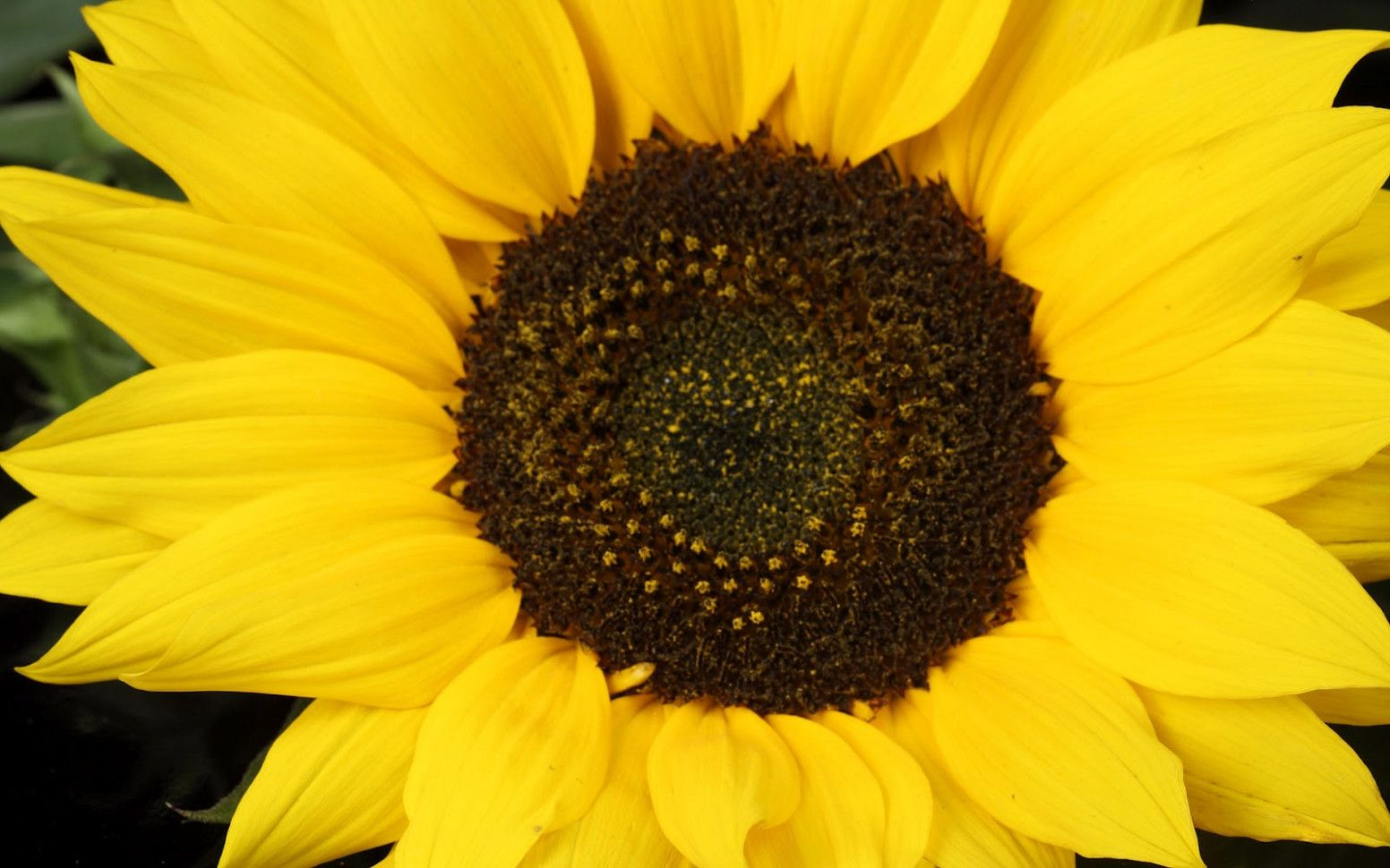 Seven Common Misconceptions About Sunflower Wallpaper | Sunflower Wallpaper #sunflowerwallpaper