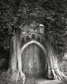 Pendant 14 ans elle photographie les plus vieux arbres du monde….