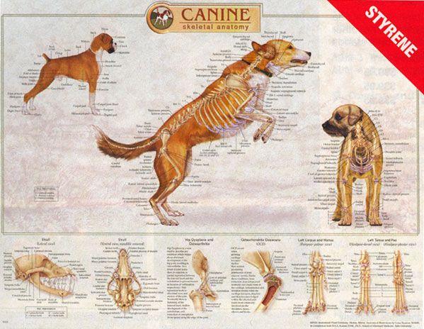 Dog Chart Canine K9 Dog