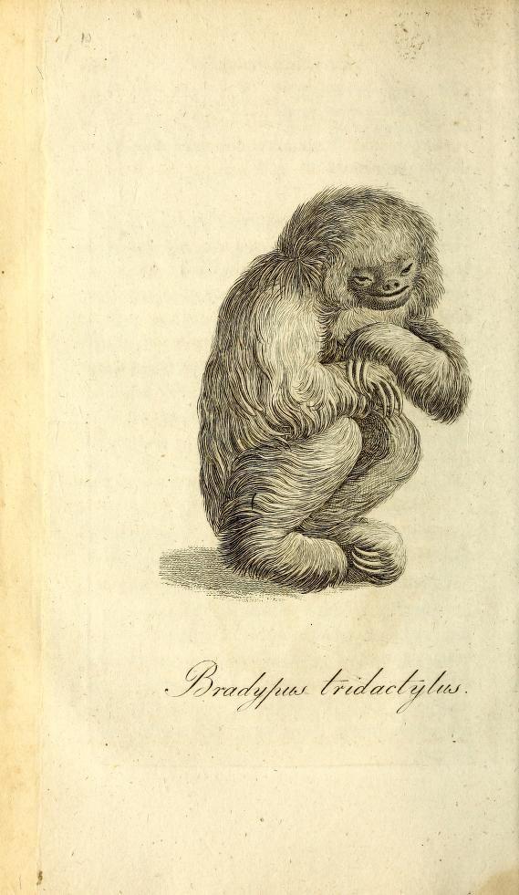 Manuel d\'histoire naturelle by Blumenbach, Johann Friedrich, 1752 ...
