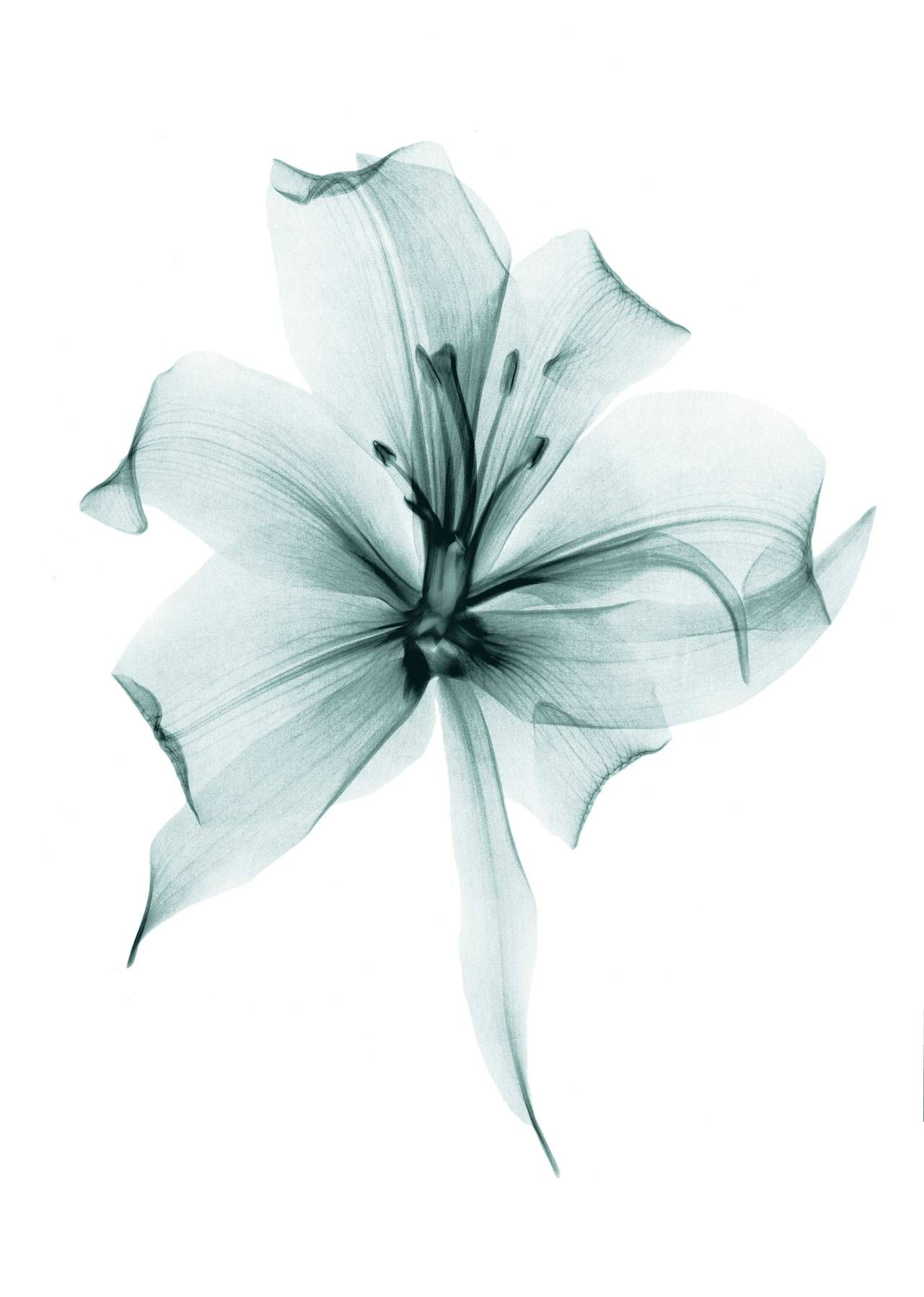Xray Flower Prints Hello Spring Lush Inspiring Images Of The Season To