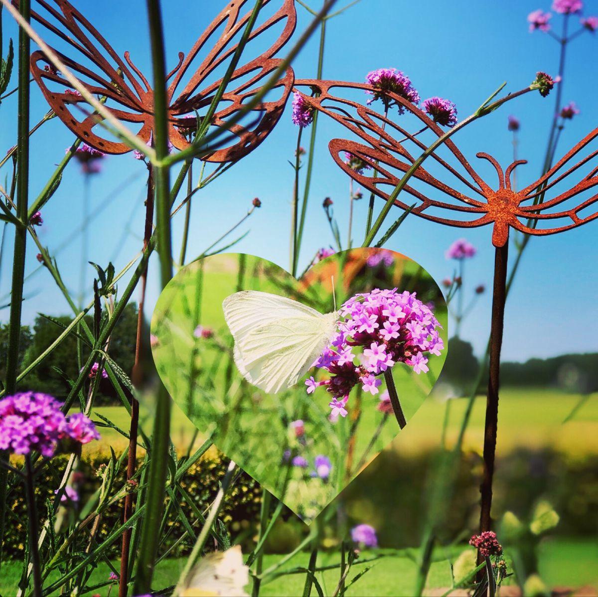 Vlinder Tuinstekers Tuinontwerp Roestig Metaal Vlinders