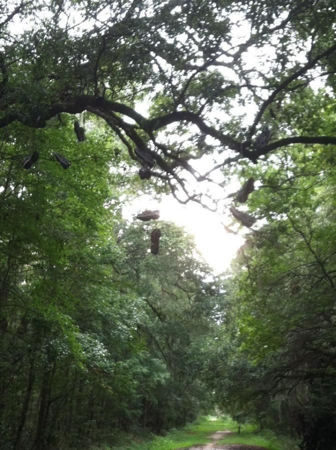 West Ashley Greenway Mountain Bike Trail In Charleston South