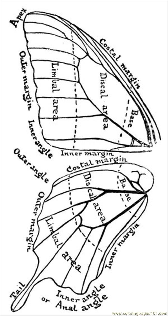 Butterfly Wings Coloring Pages | #inked | Pinterest | Butterfly ...