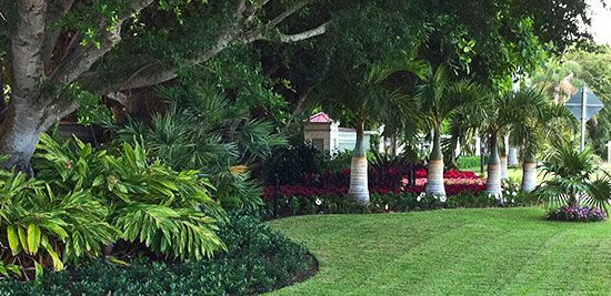 Coastal south carolina landscaping ideas design process for Landscaping plants south carolina