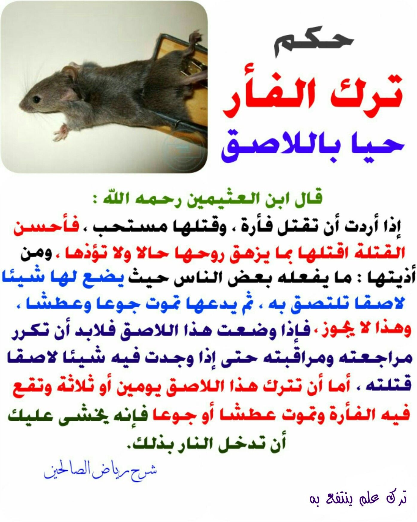 حكم ترك الفأر حيا باللاصق Islamic Quotes Fake Girls Arabic Quotes