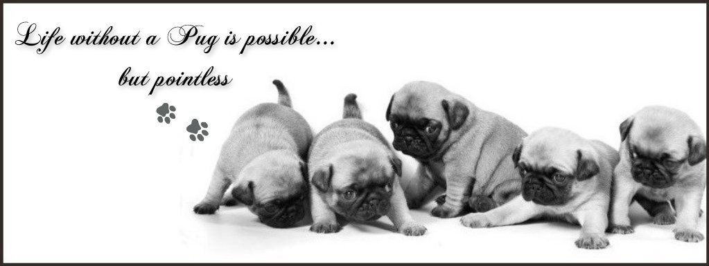 Pug Facebook Cover Photo For Your Timeline Pug Quotes With