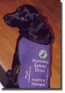 I Want A Service Dog In A Couple Years Dogs Service Dogs