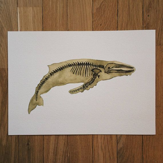 Whale Art Print Pet Gift Wall Decor Zoology Ocean Science