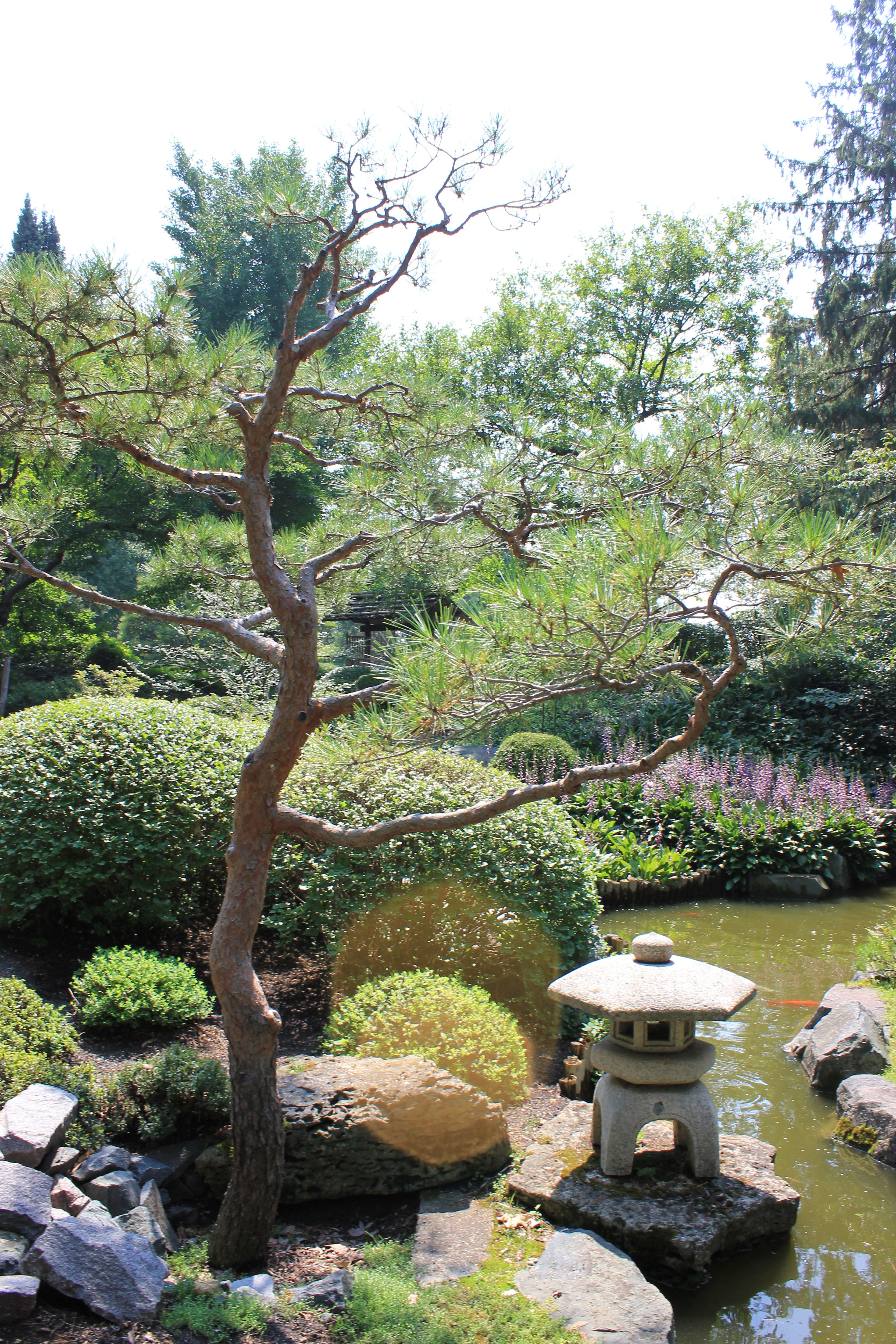 Learn to Make Origami at the Storrier Stearns Japanese Garden in ... | 5000x3333