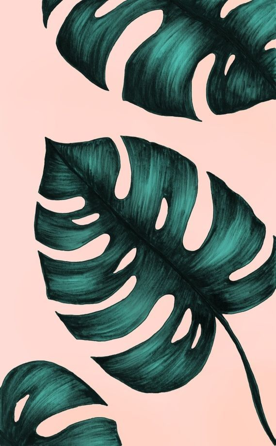 Philodendron, an art print by Nayla Smith
